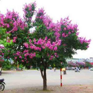Cây có hoa